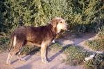 Hundefreilauf Hildesheim